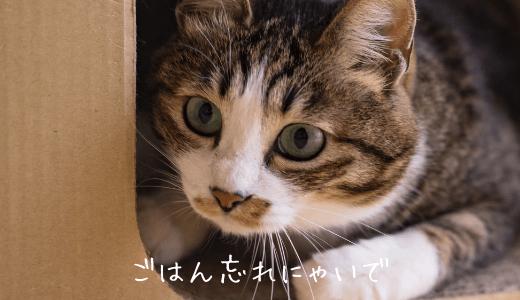 旅行中の猫ちゃんの餌や水やエアコンやトイレはどうしよう?ひとりで留守番できるか心配