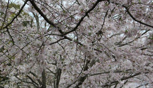 福岡から甘木公園へのアクセスは?博多駅や天神からはどうやって行く?