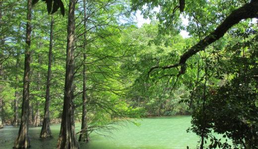 ジブリの世界のような九大の森の池には水がないって本当?行ってきた時の様子を写真で紹介!