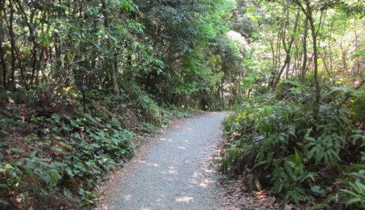 九大の森ってペットと行っていいの?桜や紅葉を楽しみながらランチはできる?