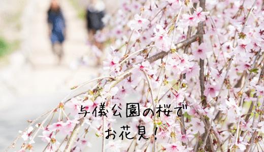 与儀公園の桜でお花見!那覇さくらまつりの駐車場や最寄りバス停は?