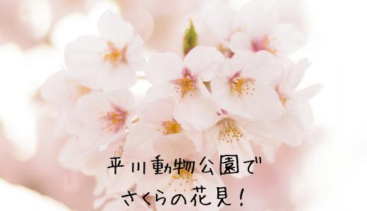 平川動物公園で桜の花見!エサやり体験や動物とのふれあいも!お弁当は持ち込みできる?